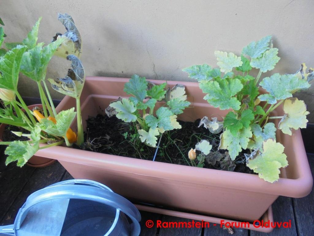 [Jardinage] Culture en bacs et Hügelkultur Dsc03511