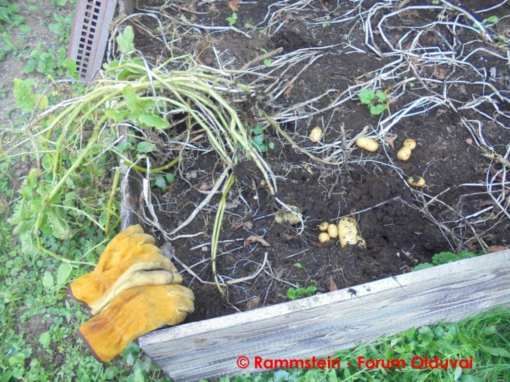 [Jardinage] Culture en bacs et Hügelkultur Dsc03912