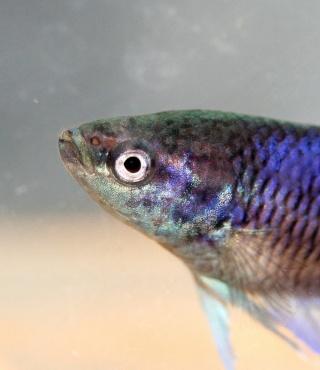 Mon poisson va mal (je croit)/traits sur les joues 851010