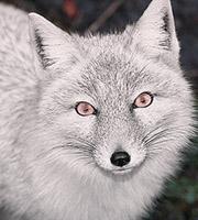Recensement et demandes des comptes multiples Fox_mi10