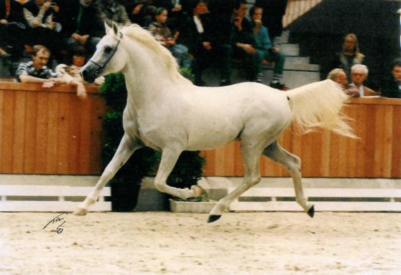 2007 Naissance pur sang anglo arabe 50% Kniazj10