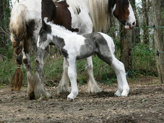 le bébé de sharon et toss! P1130213