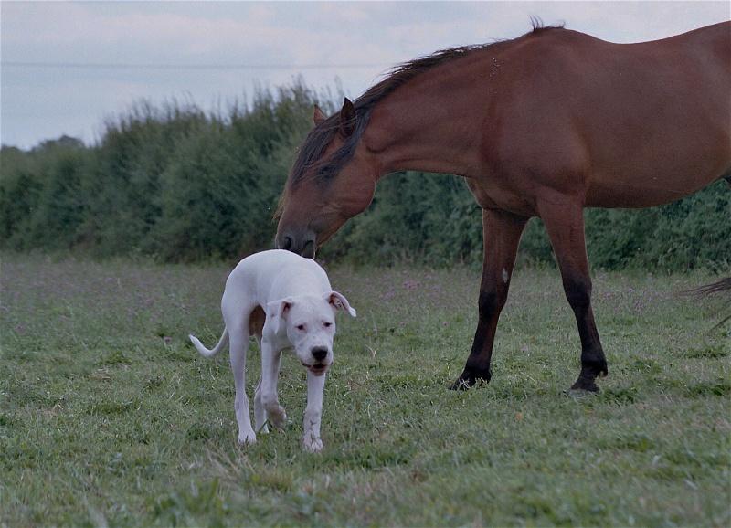nos chevaux Blanco10