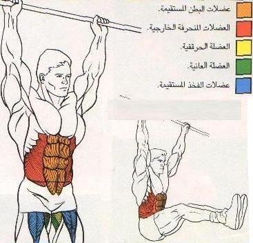 تعرف علي تشريح عضلات جسمك وأسمائها بالصور  110