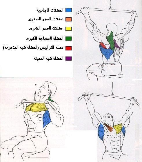 تعرف علي تشريح عضلات جسمك وأسمائها بالصور  410