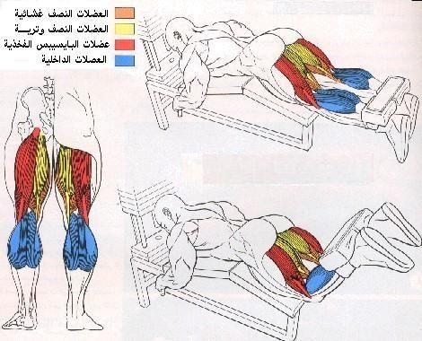 تعرف علي تشريح عضلات جسمك وأسمائها بالصور  510