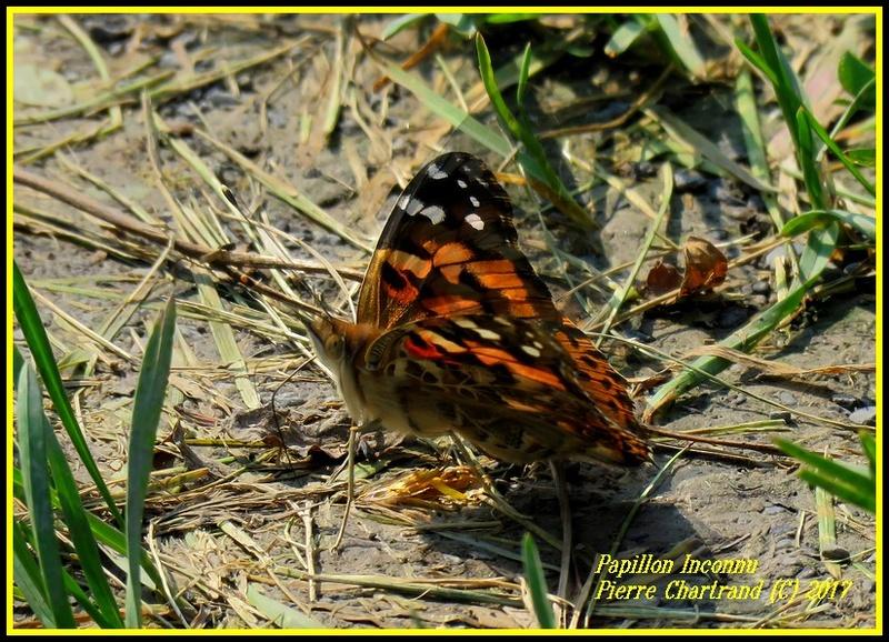 Au Parc Nature des Prairies Secteur Des Marais. section est Img_2010