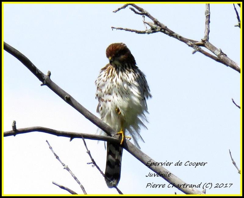 Au Parc Nature des Prairies Secteur Des Marais. Yyperv10