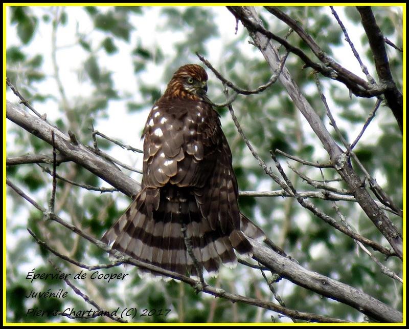 Au Parc Nature des Prairies Secteur Des Marais. Yyperv12