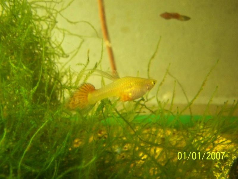 votre aquarium ou votre bassin - Page 2 100_3610