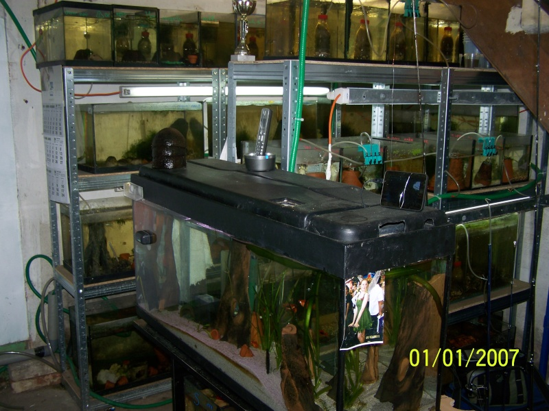 votre aquarium ou votre bassin - Page 2 100_3710