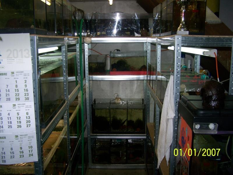 votre aquarium ou votre bassin - Page 2 100_3711