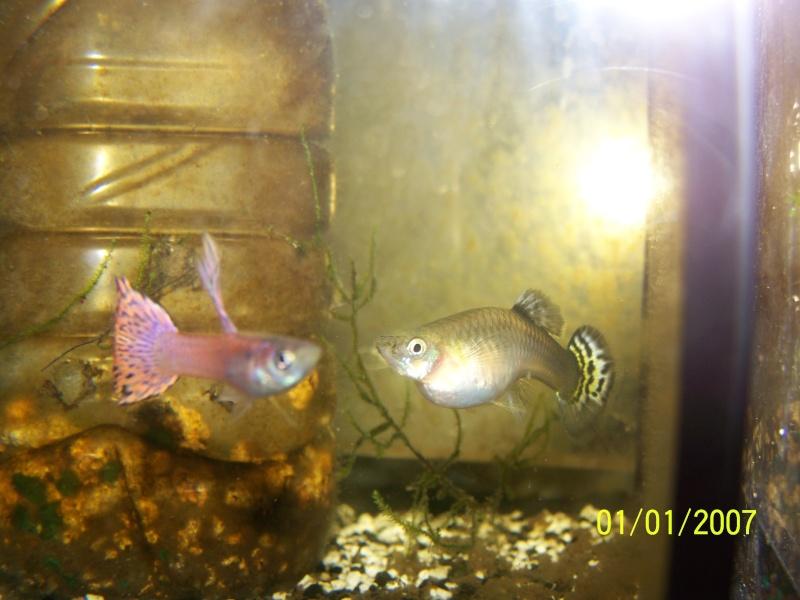 votre aquarium ou votre bassin - Page 2 100_3722