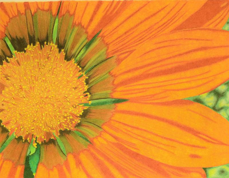 Orange soleil Dsc_4710