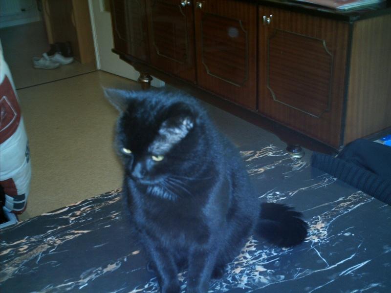 Mon chat s'est fait renversé Imag0010