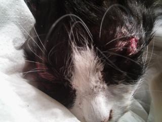 - les chats du cimetière : déjà 29 captures Chat_c10
