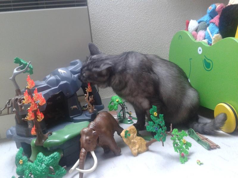 LIXOU, jeune chat européen, robe smoke, né en janvier 2015 20170710