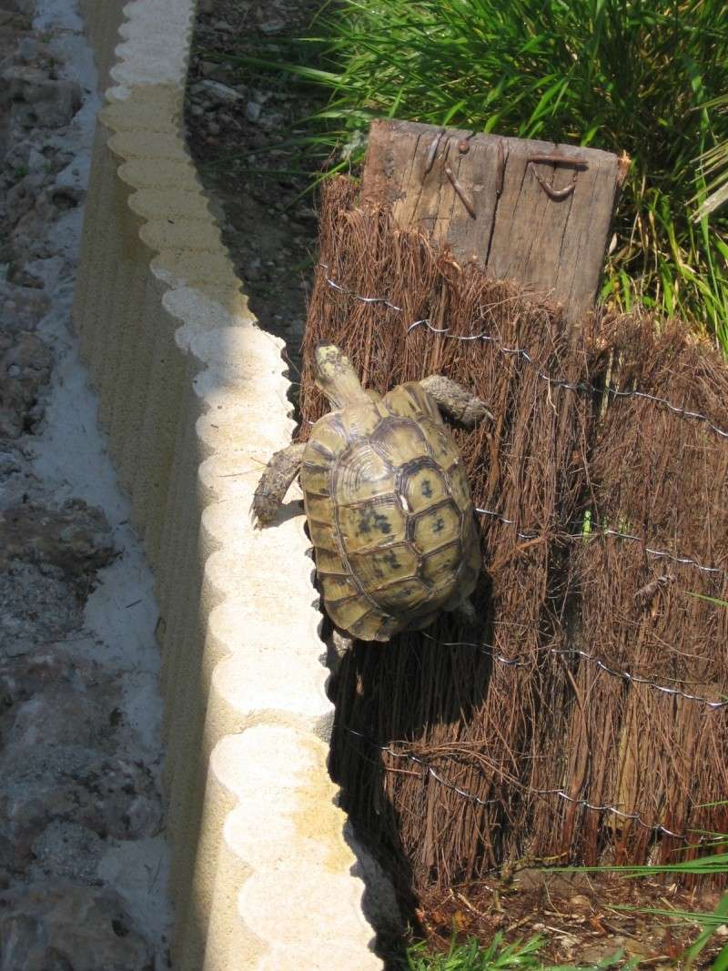 Tortues alpinistes! - Page 2 06_04_25