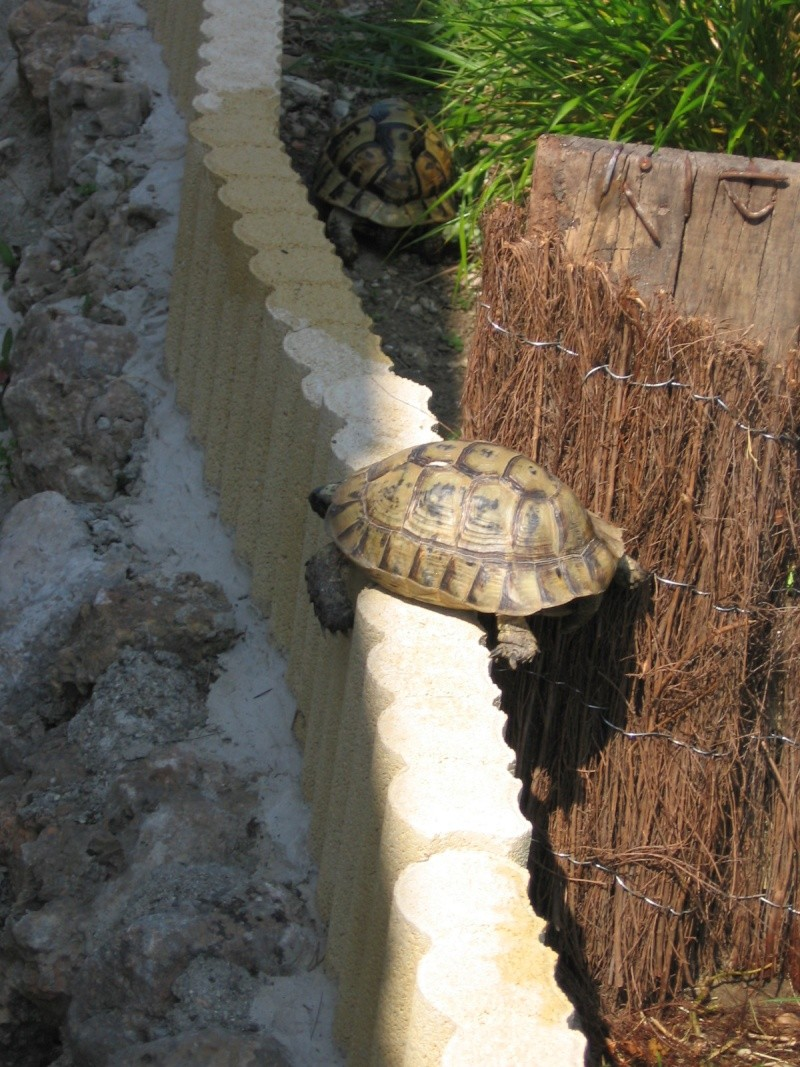 Tortues alpinistes! - Page 2 06_04_27