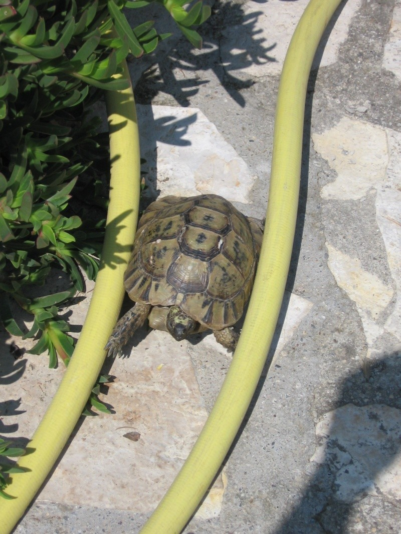 Tortues alpinistes! - Page 2 06_04_30