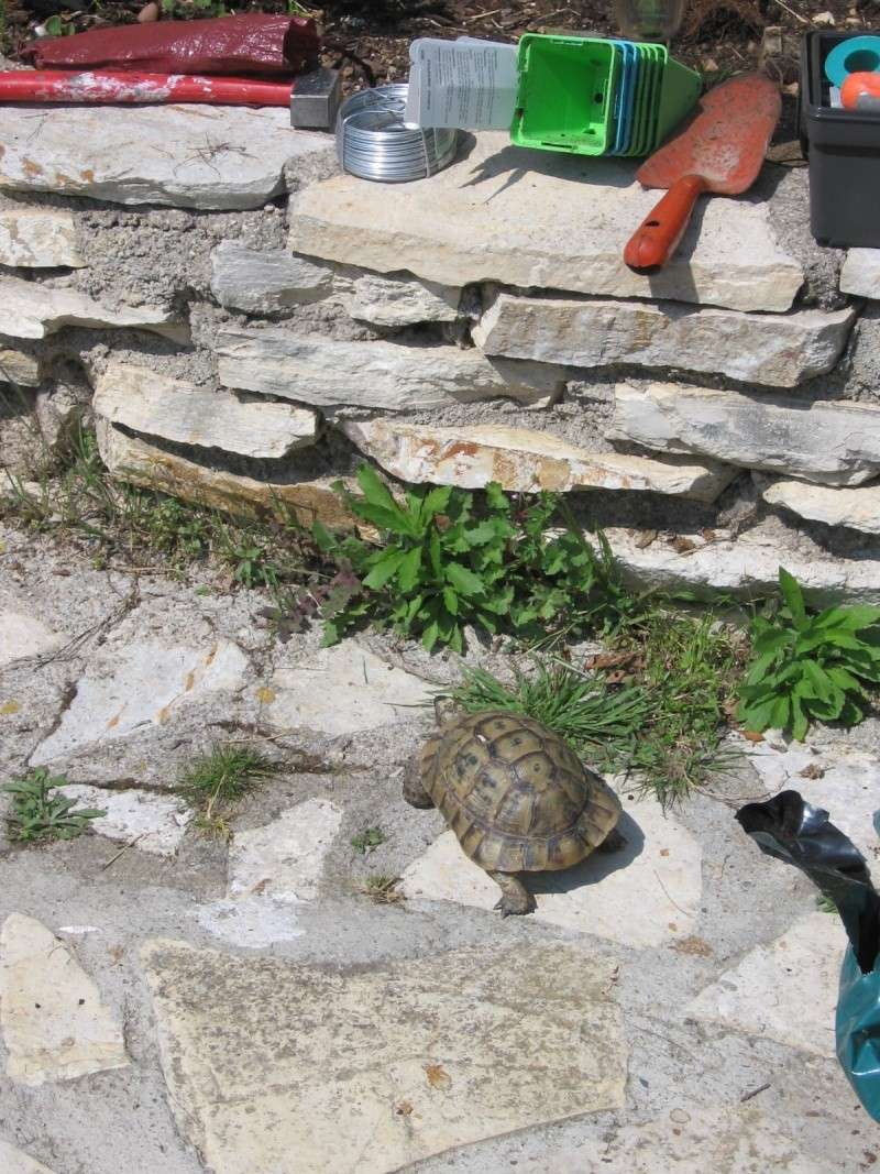 Tortues alpinistes! - Page 2 06_04_31