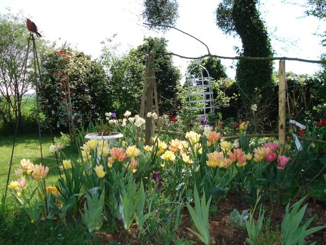 le jardin de Giroflee Jardin14