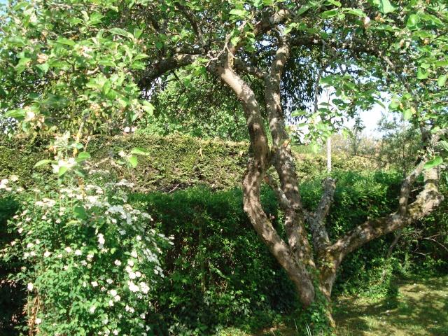 le jardin de Giroflee Jardin23
