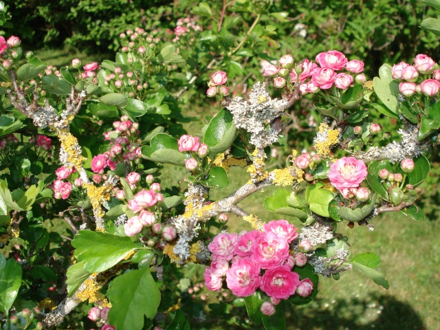 le jardin de Giroflee Jardin27