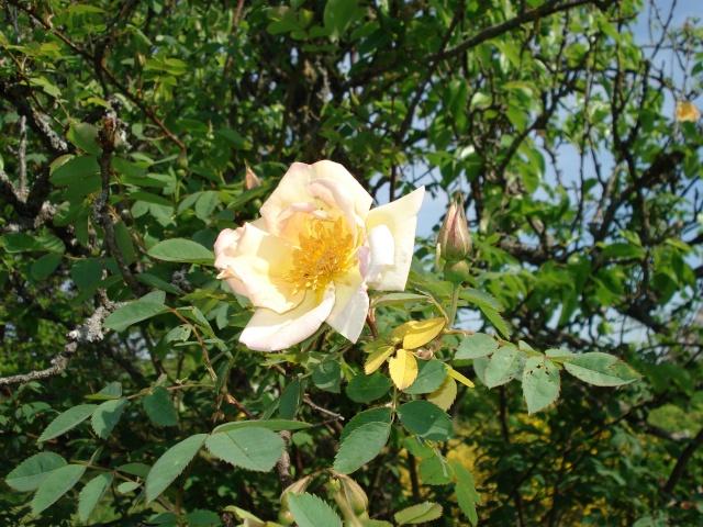 le jardin de Giroflee Jardin37