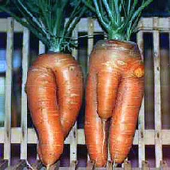Sculpture sur carotte 40293110