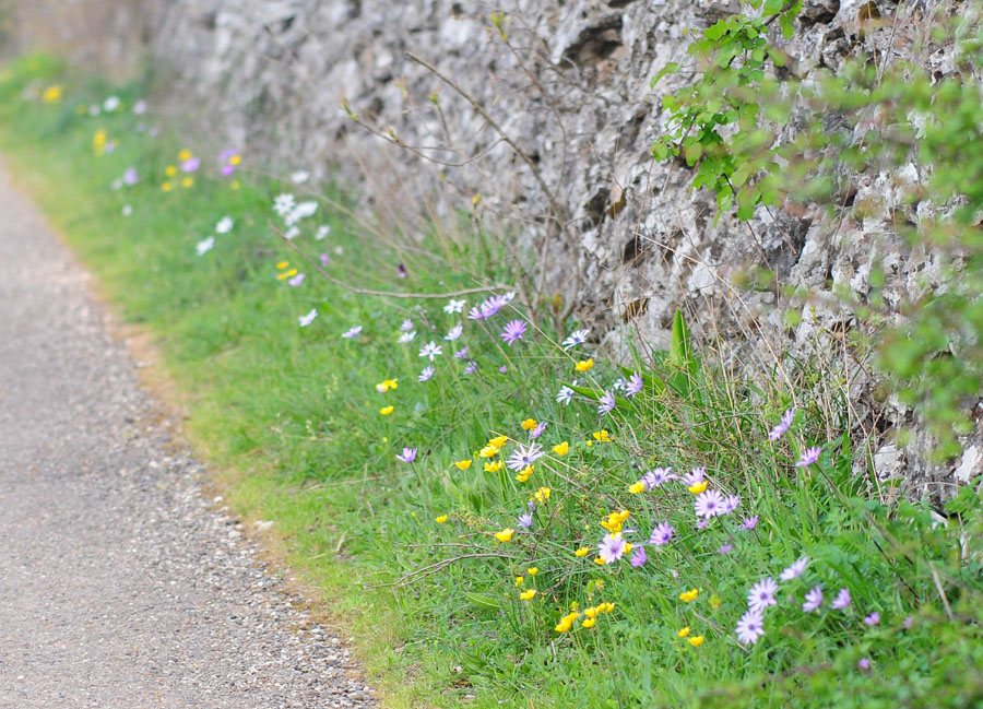 Orchidées et ambiances florales des Pouilles - Page 2 Dsc_0115