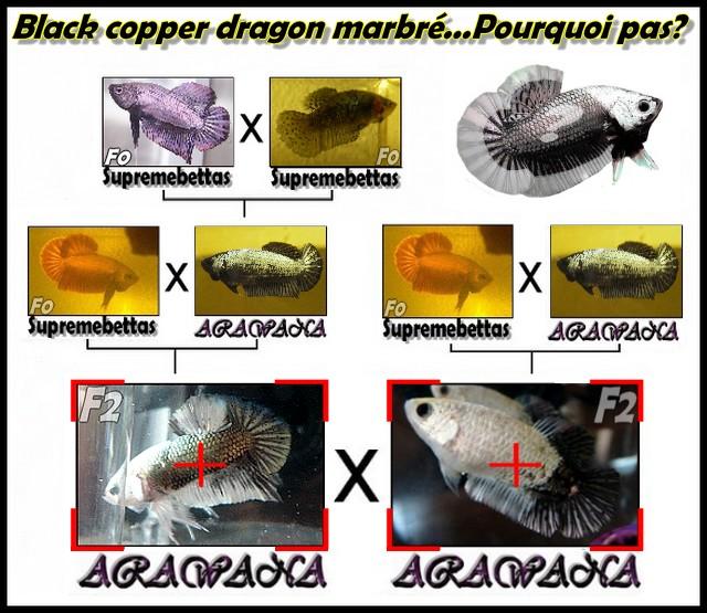 (repro black dragons marbrés) Jeunes plakats dragons F2_bla10