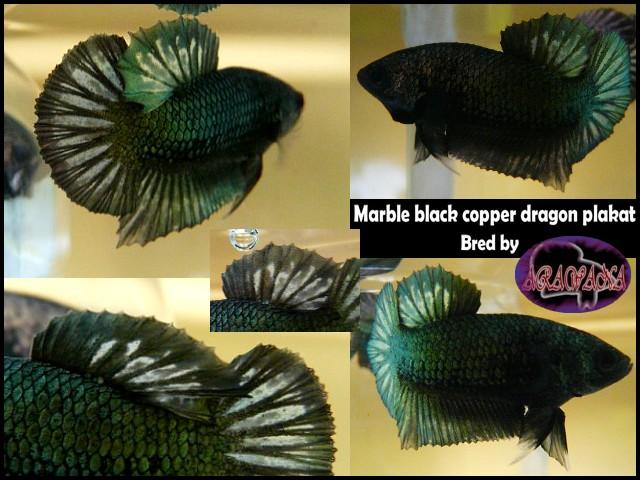 (repro black dragons marbrés) Jeunes plakats dragons Marble10