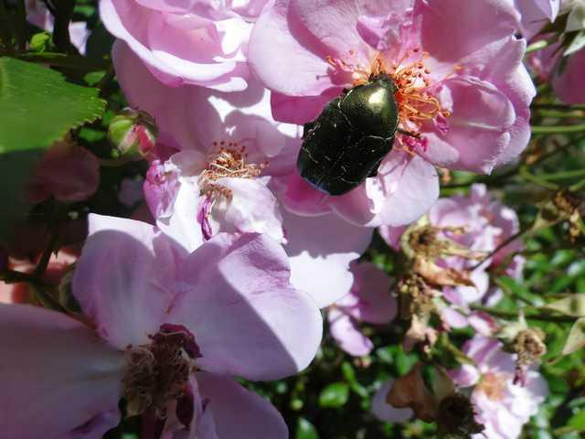 Insectes, papillons... Dsc02510