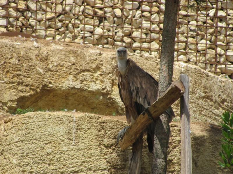 Zoo de Doué la fontaine Img_8810