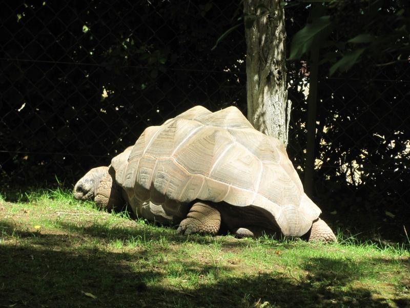 Zoo de Doué la fontaine Img_8811