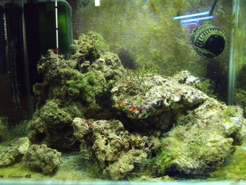 Algues Dscf0010