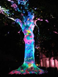 Bayeux arbre de la liberté, année 2017 Bayeux13