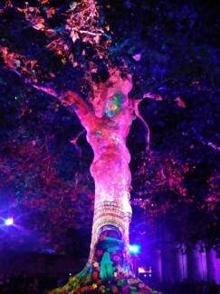 Bayeux arbre de la liberté, année 2017 Bayeux20