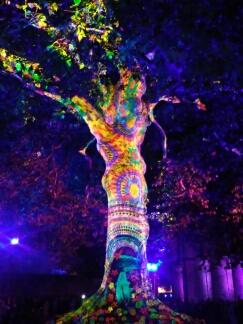 Bayeux arbre de la liberté, année 2017 Bayeux21