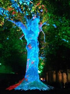 Bayeux arbre de la liberté, année 2017 Bayeux22