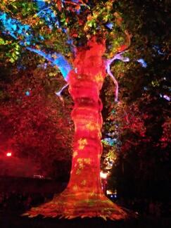 Bayeux arbre de la liberté, année 2017 Bayeux23