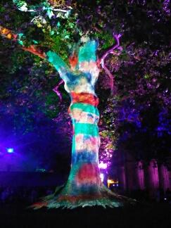 Bayeux arbre de la liberté, année 2017 Bayeux24