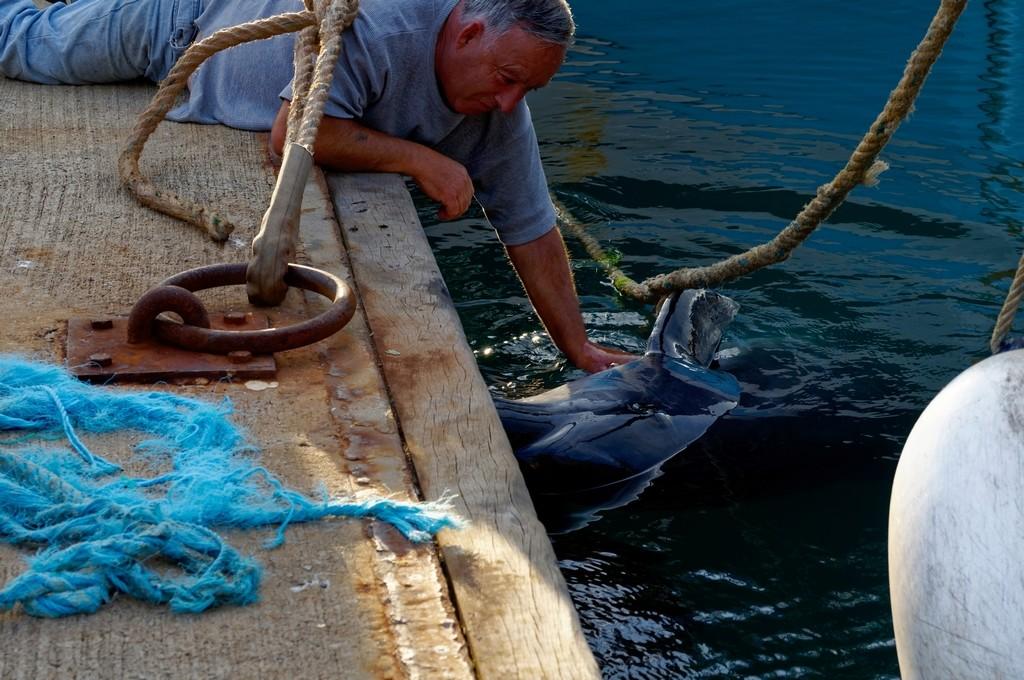 Randy le dauphin de Port Maria Quiberon ! Dsc_0070