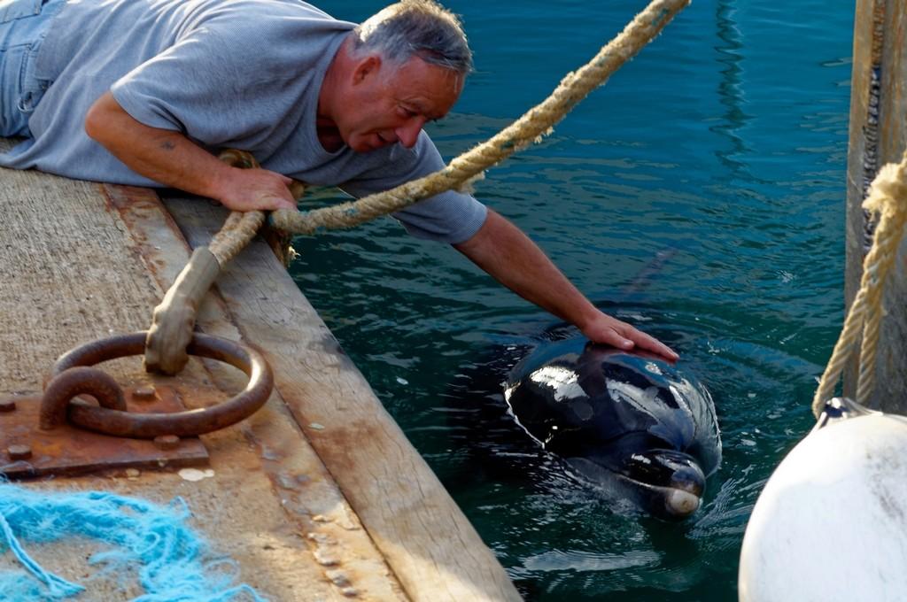 Randy le dauphin de Port Maria Quiberon ! Dsc_0072