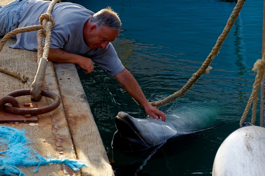 Randy le dauphin de Port Maria Quiberon ! Dsc_0081