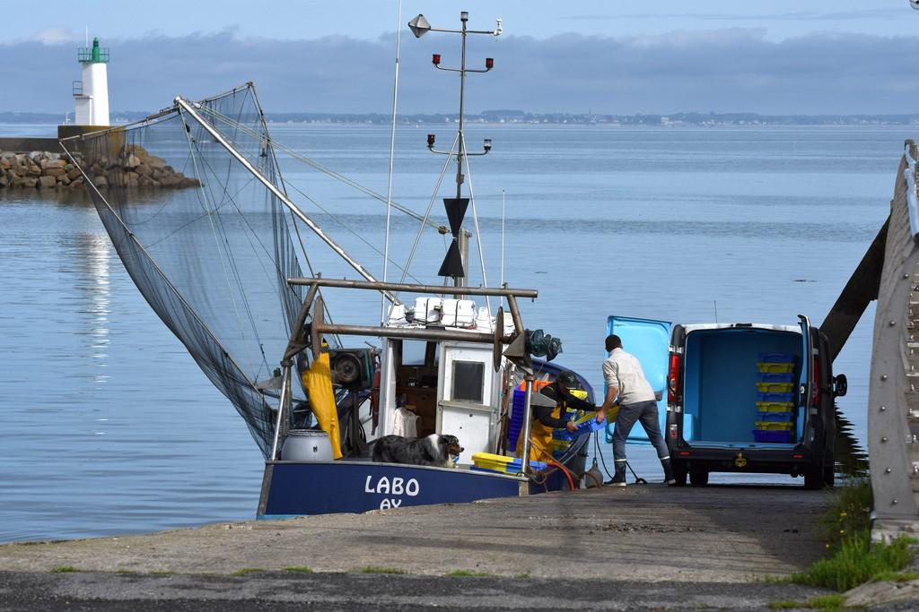 retour de pêche débarquement des caisses d'anchois ! Dsc_0411
