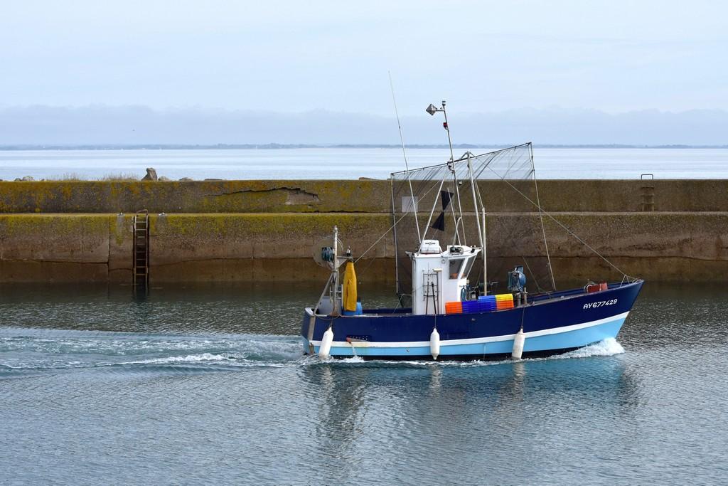 retour de pêche débarquement des caisses d'anchois ! Dsc_0412