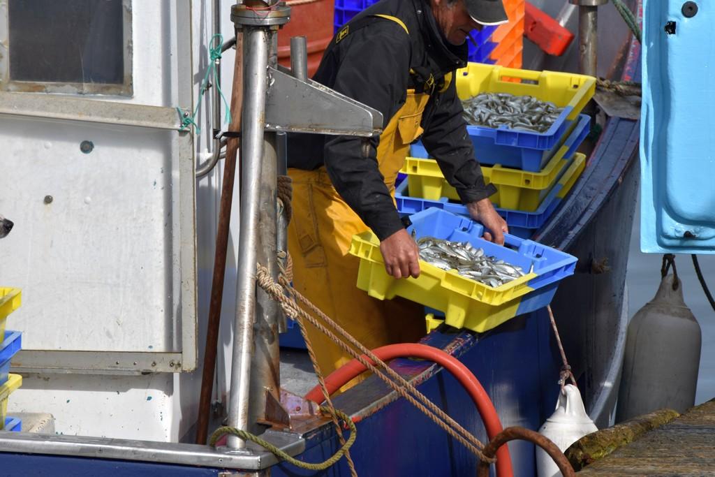 retour de pêche débarquement des caisses d'anchois ! Dsc_0413