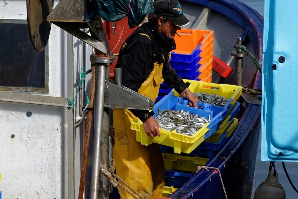 retour de pêche débarquement des caisses d'anchois ! Dsc_0415